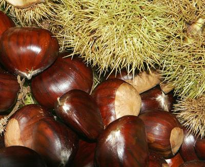 Lovely sweet chestnuts!