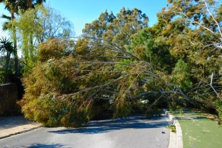 A storm damaged tree blocks the road.