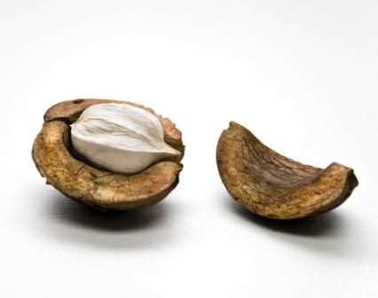 A Hickory Nut; hickory make excellent firewood. Remember to season it properly.